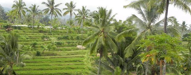 Tetebatu village