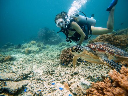 Gili Trawangan Underwater. Credit by https://www.tommyschultz.com/blog/gili-trawangan-turtles/