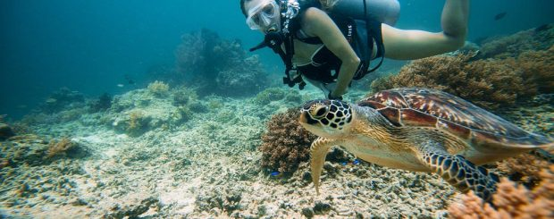 Gili Trawangan Underwater. Credit by https://www.tommyschultz.com/blog/gili-trawangan-turtles/